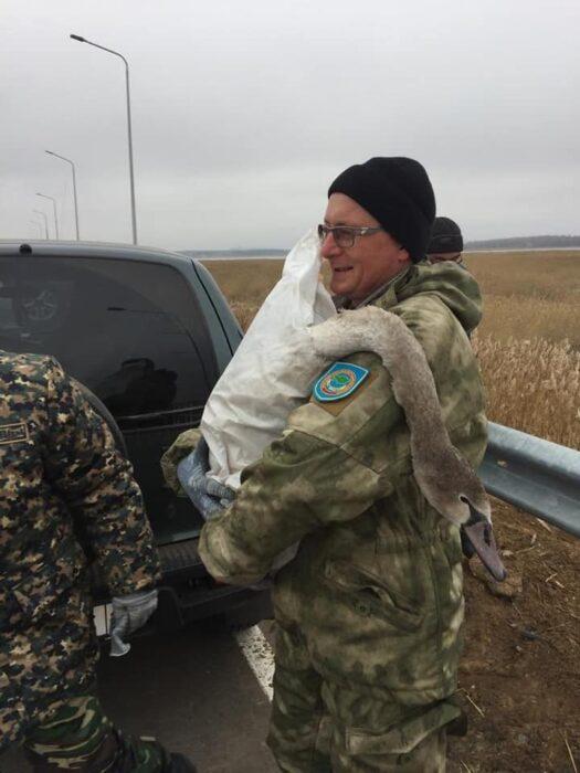 733fda6033e12b6dc359f8cefe5838b1 525x700 - 10 swans rescued in SKO
