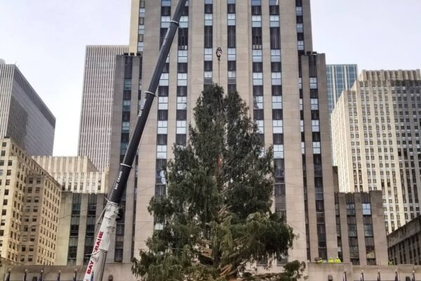 8a3a13044055859652a3104ced84cc33 600x400 - In new York established the main Christmas tree